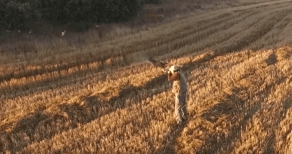 quail hunting in spain